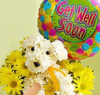 Shop for get well flowers & giftsts